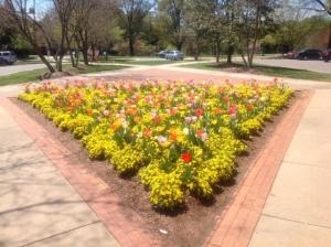 Flowers at WFU